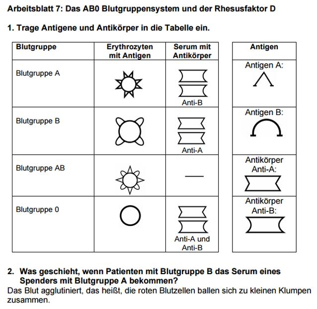 Erfreut Blutgruppen Arbeitsblatt Antworten Fotos - Arbeitsblätter ...